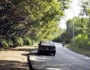 اسلام آباد: وفاقی دارالحکومت میں سڑک کنارے لگے درخت دلکش منظر پیش کرر ..