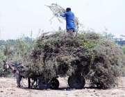 حیدر آباد: ایک شخص گدھا ریڑھی پر ٹہنیاں رکھنے میں مصروف ہے۔