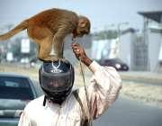 لاہور: موٹر سائیکل سوار اپنے بندر کے ہمراہ منزل کی جانب رواں ہے۔