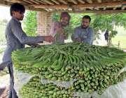 فیصل آباد: کسان فروخت کے لیے تازہ سبزی سجا رہا ہے۔
