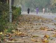 لاہور: باغ جناح میں سڑک پر بکھرے پتے خوبصورت منظر پیش کر رہے ہیں۔