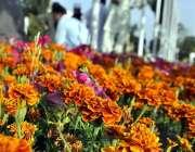 اسلام آباد: سڑک کنارے لگے موسمی پودوں اور پھولوں کا خوبصورت منظر۔