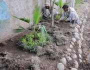 راولپنڈی: پی ایچ اے کے مالی لیاقت باغ روڈ کنارے کیاریوں میں پودے لگار ..