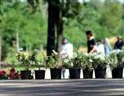 اسلام آباد: وفاقی دارالحکومت میں جشن بہاراں کے موقع پر گملوں میں سجائے ..