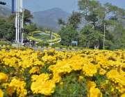 اسلام آباد: سڑک کنارے گرین بیلٹ پر پھولوں کا دلکش منظر۔