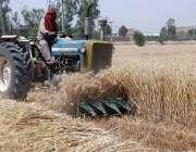 فیصل آباد: کسان ٹریکٹر کی مدد سے گندم کی کٹائی میں مصروف ہے۔فایسفا
