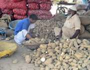 فیصل آباد: مزدور سبزی منڈی میں شکرقندی چھانٹی کر رہا ہے۔