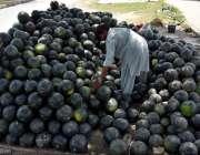 اسلام آباد: وفاقی دارالحکومت میں محنت کش سڑک کنارے فروخت کے لیے تربوز ..