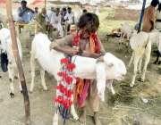 لاہور: مویشی منڈی میں ایک بچہ قربانی کے جانوروں کی سجاوٹ کا سامان فروخت ..