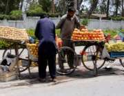 راولپنڈی: محنت کش سائیکل پر فروٹ فروخت کے لیے سجا رہاہے۔