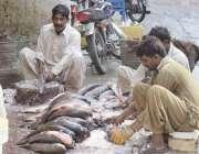 لاہور: مچھلی منڈی میں کاریگر مچھلی کی صفائی میں مصروف ہیں۔