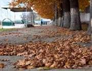 گلگت: بدلتے موسم کے ساتھ درختوں سے خشک پتے زمین پر پڑے ہیں۔