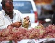 اسلام آباد: وفاقی دارالحکومت میں ریڑھی بان انگور فروخت کررہا ہے۔
