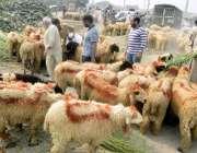 لاہور: شہری عیدالاضحی پر قربانی کے لیے چھترا پسند کر رہے ہیں۔