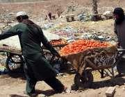 اسلام آباد: ریڑھی بان فروخت کے لیے ٹماٹر لیجا رہے ہیں۔