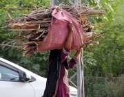 سرگودھا: خانہ بدوش خاتون گھر کا چولہا جلانے کے لیے خشک لکڑیاں اٹھائے ..