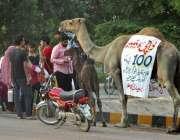 فیصل آباد: خانہ بدوش خاتون اونٹنی کا دودھ فروخت کررہی ہے۔