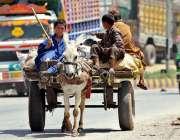 راولپنڈی: خانہ بدوش بچے کار آمد اشیاء گدھا ریڑھے پر رکھے لیجا رہے ہیں۔