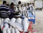 اسلام آباد: چک شہزاد روڈ کنارے محنت کش نے مچھلی فروخت کے لیے سجا رکھی ..