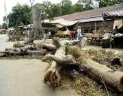لاہور: مغلپورہ روڈپر کاٹے گئے درخت سڑک کنارے پڑے ہیں۔