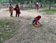 فیصل آباد: محنت کش بچیاں درخت سے گرے ہوئے بیر جمع کر رہی ہیں۔