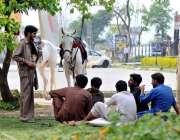 اسلام آباد: کوچوان اپنے خوبصورت گھوڑوں کو لیے سواری کے لیے گاہکوں کا ..