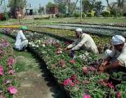 ملتان: پی ایچ اے کے اہلکار قاسم پارک میں منعقدہ پھولوں کی نمائش کے موقع ..