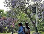 اسلام آباد: وفاقی دارالحکومت میں درختوں پر کھلے پھول دلکش منظر پیش ..