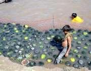 سیالکوٹ: محنت کش بچہ تربوز فروخت کے لیے نہری پانی میں ٹھنڈے کر رہا ہے۔