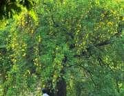 اسلام آباد: وفاقی دارالحکومت میں کھلے موسمی پھولوں اور پودوں کا خوبصورت ..