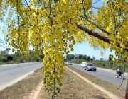 راولپنڈی: درخت پر لگے موسمی پھول دلکش منظر پیش کر رہے ہیں۔