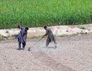 ملتان: کسان کھیتمیں روز مرہ کام میں مصروف ہیں۔
