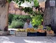 اسلام آباد: محنت کش ستارہ مارکیٹ روڈ کنارے درخت کے نیچے پھل فروخت کر ..