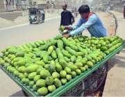 حیدر آباد: ریڑھی بان فروخت کے لیے آم سجا رہا ہے۔