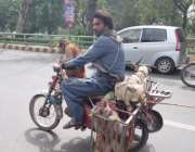 لاہور: ایک مداری اپنی ٹیم کو موٹر سائیکل پر بٹھا کر کینال روڈ سے گزر ..