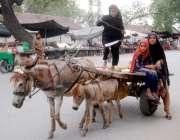 لاہور: خانہ بدوش بچیاں گدھا ریڑھی پر سوار ہو کر جا رہی ہیں۔