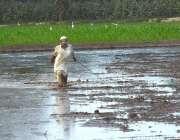 ملتان: کستان کھیت میں روزہ مرہ کام میں مصروف ہے۔