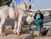 راولپنڈی: شادی و دیگر تقریب کے لیے گھوڑے کا رقص پیش کرنے کے لیے ایک شخص ..