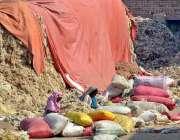 ملتان: محنت کش خواتین روئی کی صفائی ستھرائی کررہی ہیں۔