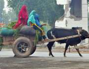 ملتان: کسان خواتین بیل گاڑی پر مویشیوں کا چارا لادھے جار ہی ہیں۔