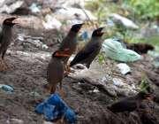 حیدر آباد: پرندہ گرمی کی شدے سے بچنے کے لیے سائے میں بیٹھے ہیں۔