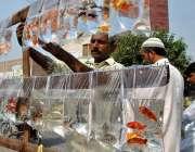 ملتان: دکاندار گاہکوں کو متوجہ کرنے کے لیے رنگ برنگی مچھلیاں سجار ہا ..