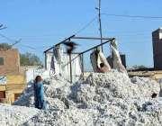 سرگودھا: مزدور روئی کی صفائی ستھرائی میں مصروف ہیں۔