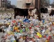 لاہور: ویٹ مین روڈ مغلپورہ پر لگائے گئے کوڑے کا ڈھیر انتظامیہ کی نااہلی ..