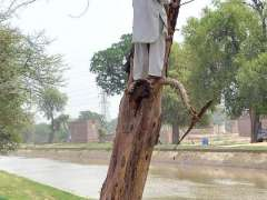 MULTAN: A person busy in trimming tree skin for domestic use.