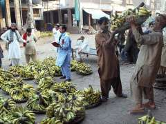 MULTAN: Vendors selling banana in fruit and vegetable market.