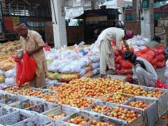 MULTAN: Labourers busy in packing tomatoes in wooden boxes at Vegetable Market to supply to different markets.