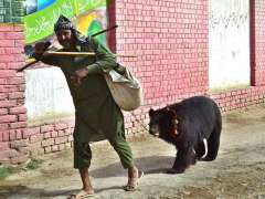 SARGODHA: A juggler on the way along with bear in a village Moza Boori.