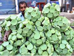 LARKANA: A vendor displaying seasonal fruit (Dodi) to attract the customers at Jinnah Bagh Road.