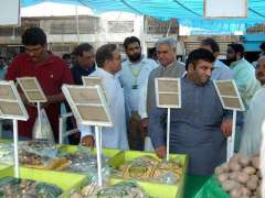 FAISALABAD: State Minister for Textile Hajji Akram Ansari is checking quality and prices of commodities at Sasta Ramzan Bazaar at Chati Wali Ground Jinnah Colony.